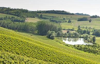 Montalbera winery Piedmont