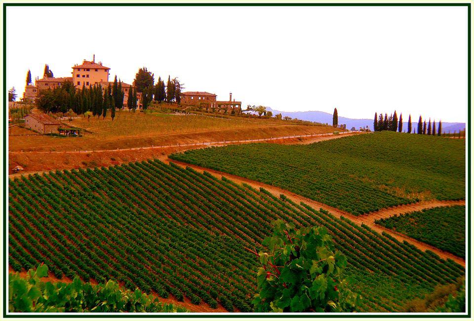 Tuscany Vineyards by Hans Vingerhoed
