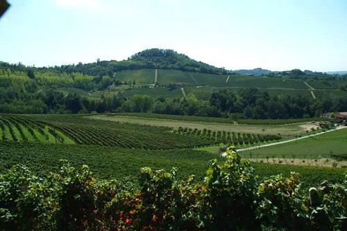 Italian Winery for Sal