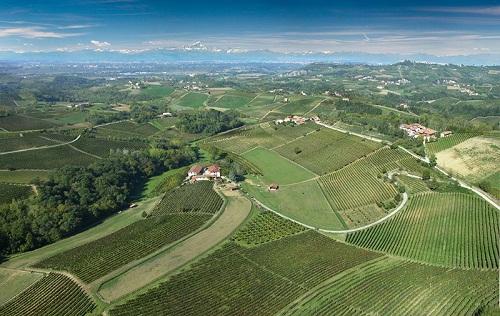 Piedmont Winery Sale