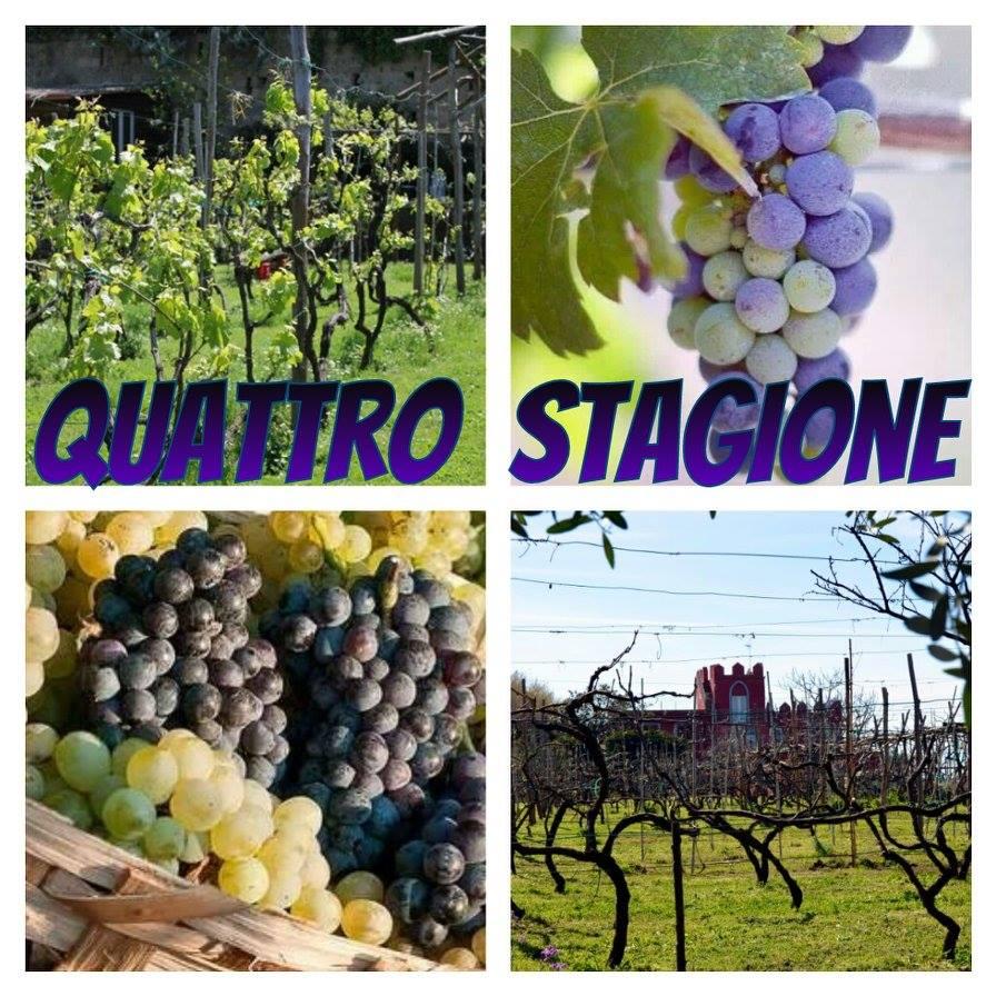 Four Seasons of Italian Wine