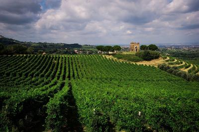 Frascati Wines by Michelle Aschbacher -