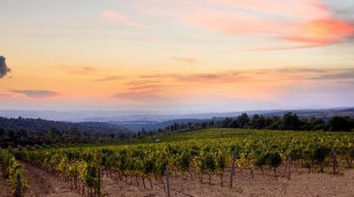 Italian Wine Producer