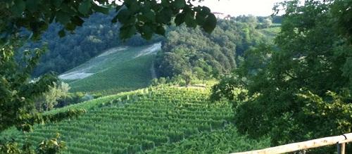 Italian White Wine Estates