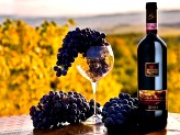 Best Wines of Tuscany