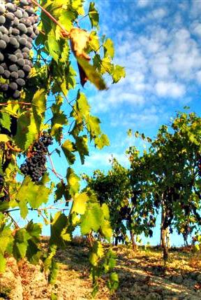 Puglia wines