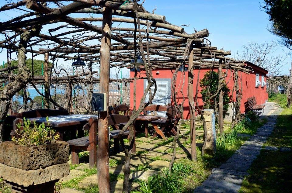 Vineyard on Procida Island