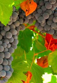 Wineries near Rome