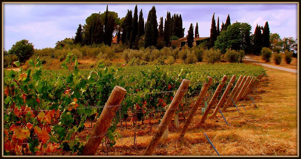 Chianti Tuscany by Hans Vingerhoed