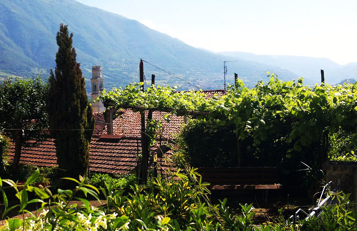 Vineyards and rooftops Italy